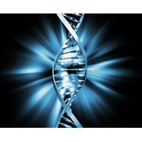 Testele genetice – ne indica apartenenta