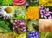 Iasomie, zambile, trandafiri: Beneficiile ascunse in flori