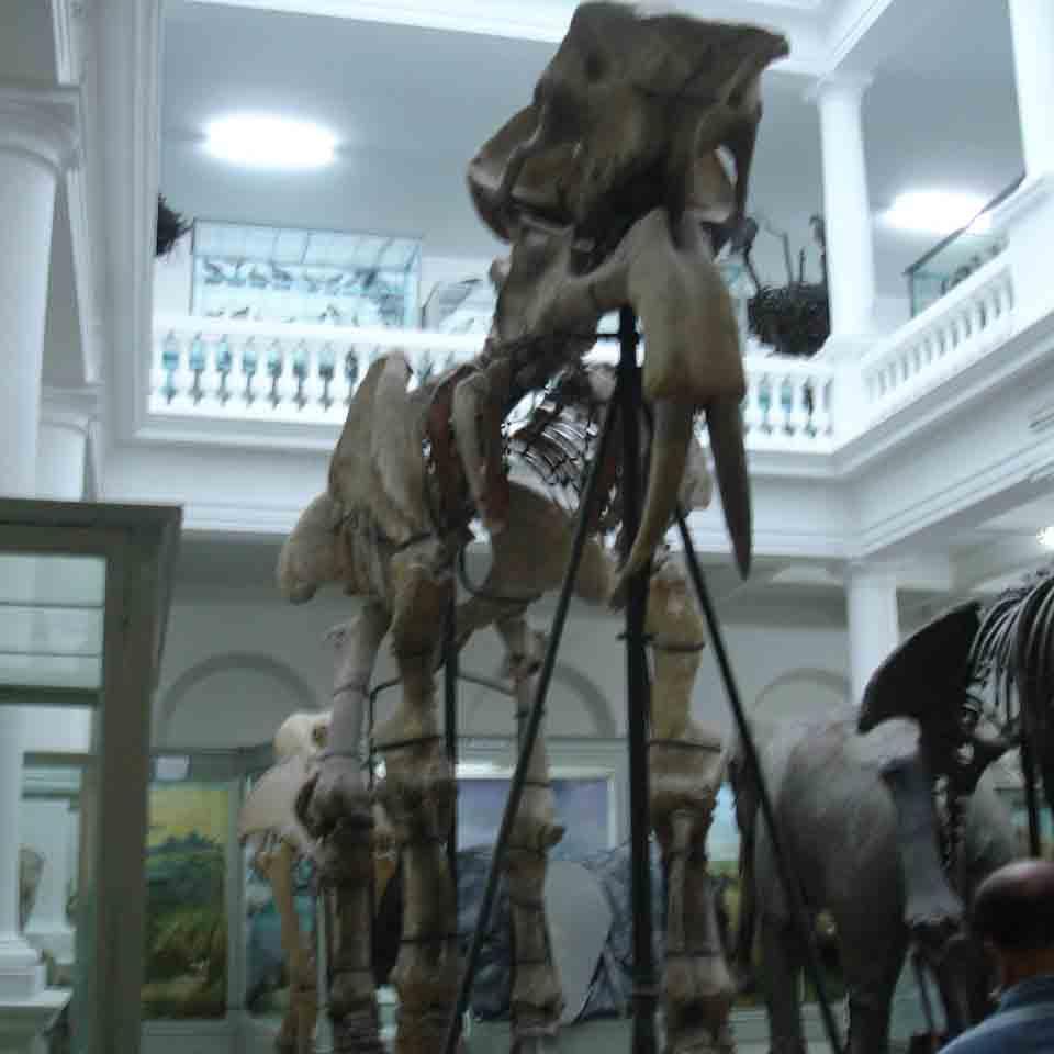 Redeschiderea Muzeului Antipa