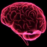 Genele, responsabile de doar 40% din inteligenta umana