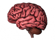 Creierul este diferit la oamenii timizi