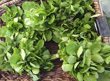 Nasturelul – o planta de sezon cu surprize placute pentru sanatate