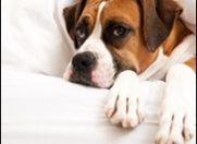 Beneficiile adoptarii unui animal de companie