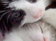 Marea pisicareala de primavara