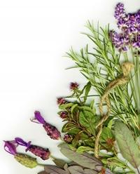 Istoria plantelor si intrebuintarea lor
