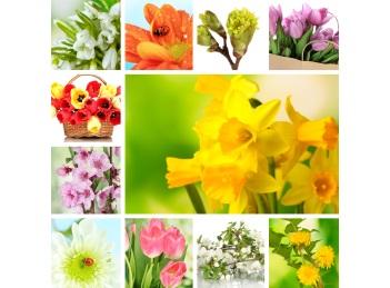 Florile de primavara fac miracole asupra sanatatii