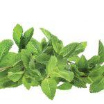 Respiratie urat mirositoare: cauze si tratament