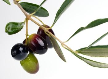 Beneficiile uleiului de masline