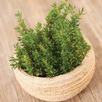 3 plante potrivite cu spiritul Craciunului