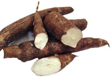 Ironia cassava: o leguma benefica, dar… toxica