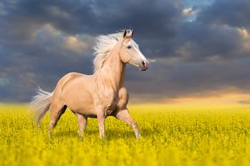 Ce inseamna cand visezi cal?