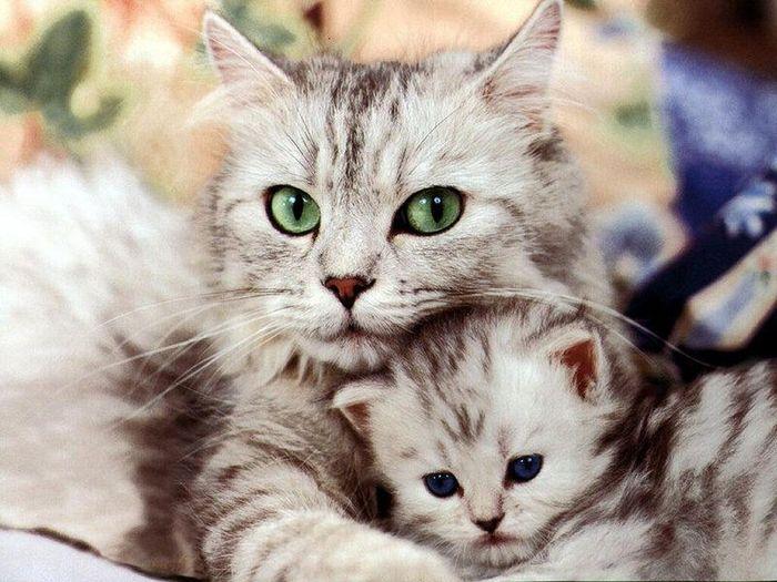 Ce inseamna daca visezi pisica