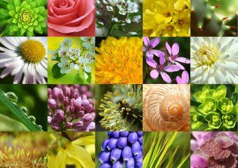 Zodiac floral: iata ce floare esti in functie de ziua nasterii