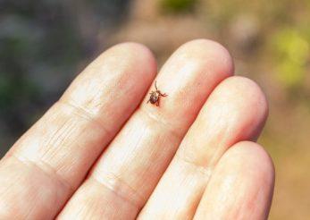 Tot ce trebuie să ştii despre boala Lyme