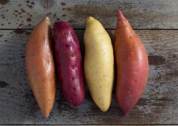Cartoful dulce, sursă de vitamina D