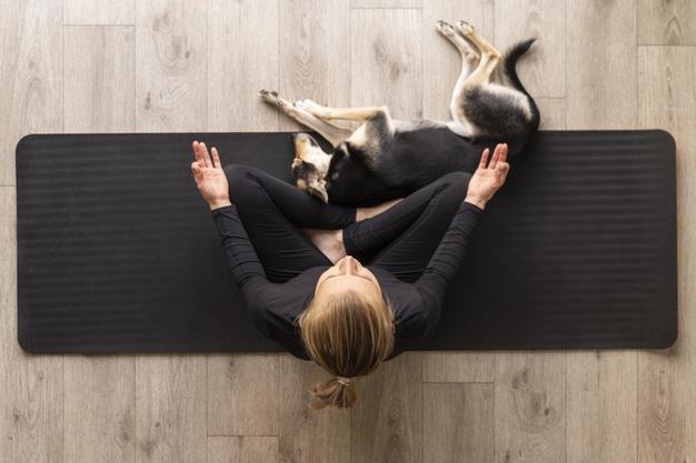 Ghid pentru stăpânele de animale – 5 boli de care pot suferi câinii